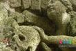 Prehliadka Mestského cintorína v Zlatých Moravciach