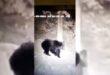 Autentické video medveďa z nášho okolia